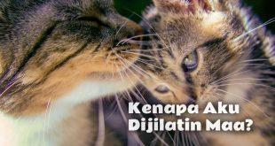 Alasannya Kenapa Anak Kucing Sering Dijilat oleh Induknya