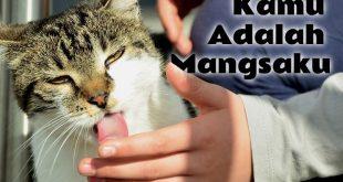 Kenapa Kucing Menjilati Kita