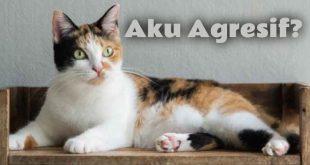 Kenapa Kucing Tiga Warna Bertingkah Lebih Agresif