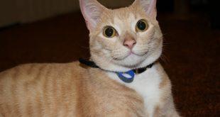 Ternyata Memelihara Kucing Bikin Hidup Lebih Sehat dan Bahagia